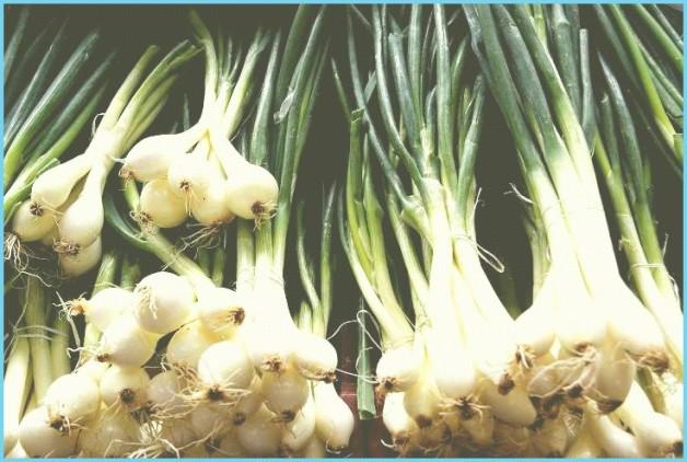 Чим корисний свіжий зелений лук