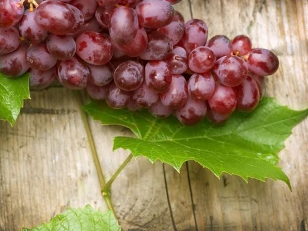 Користь винограду і виноградних кісточок